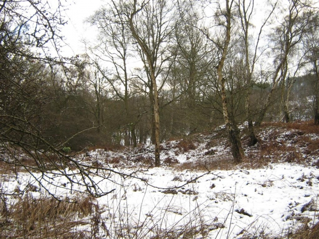 winter woodlands look sparse.preview